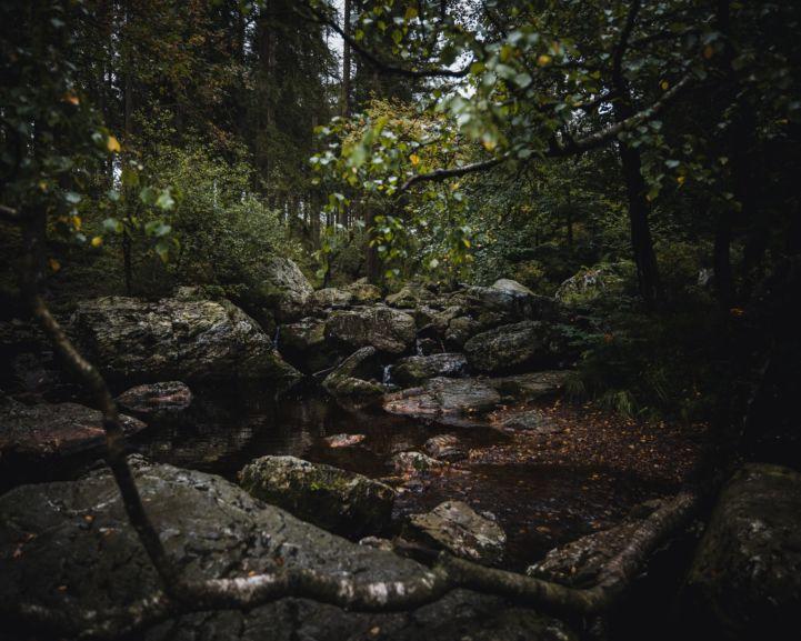Regionaal Natuurpark Ardennen